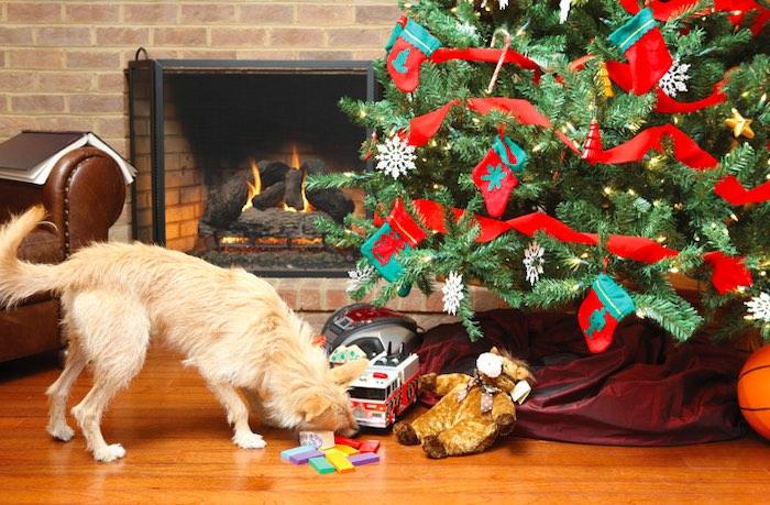 pet friendly christmas decorations